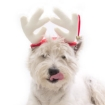 Picture of Xmas Antlers Size Small   Free Delivery