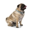 Picture of Blue Swimmable Dog Collar Size Small | Free Delivery