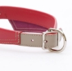 Picture of Saville Row Red Dog Collar Size Medium | Free Delivery